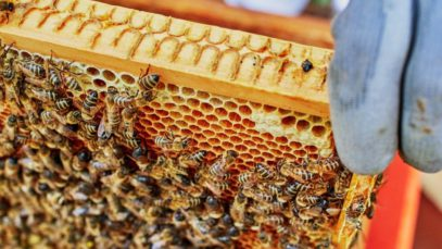 Why Urban Beekeeping Is so Popular